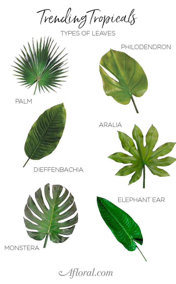 Decorate your home, party, wedding or event with lifelike, artificial tropical leaves from Afloral.com.  Find the faux stem you're looking for year round at Afloral.com.