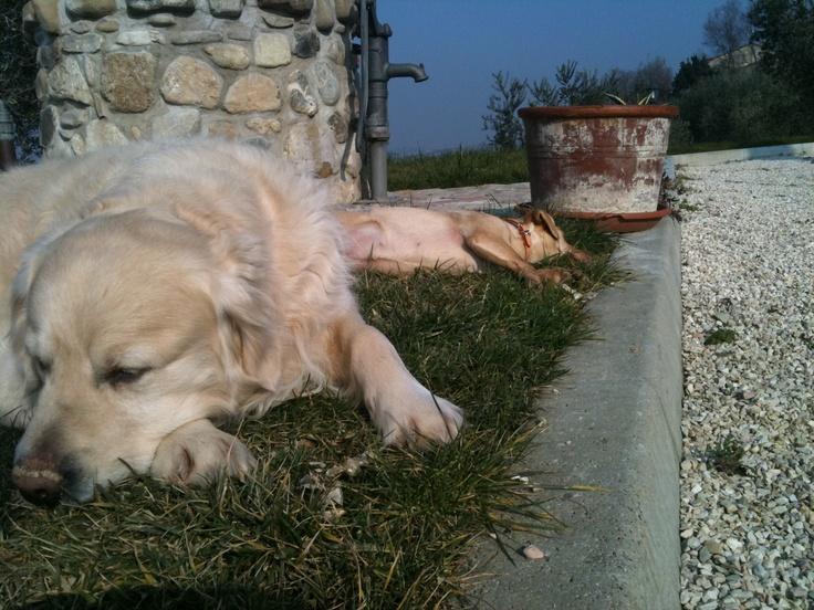 riposo al sole