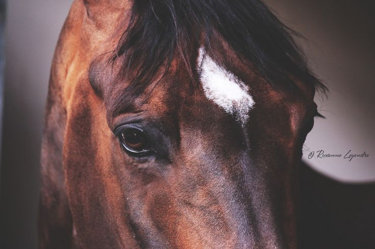 www.pegasebuzz.com | Equestrian photography : Roxanne Legendre at Athina Onassis Horse Show for PegaseBuzz.