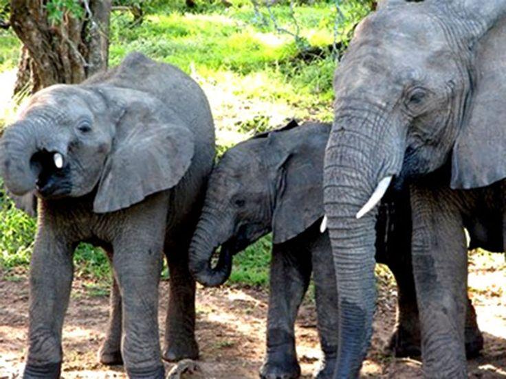Animal Sanctuaries in Mizoram, India @ Sanctuariesindia.com