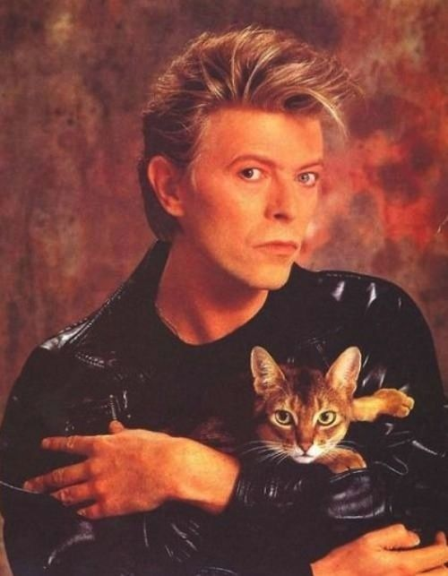 17 Awkward Celebrity And Cat Portraits.  It's a David Bowie Glamor Shot!  I died.
