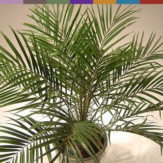 10 Best House plants That Clean The Air