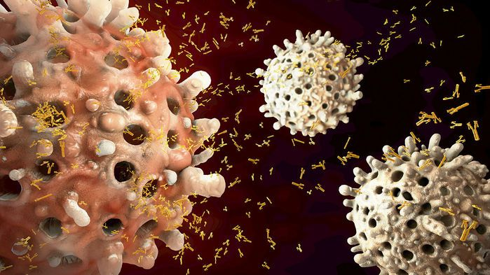 White blood cells launch DNA 'webs' to warn of invaders | Science | AAAS