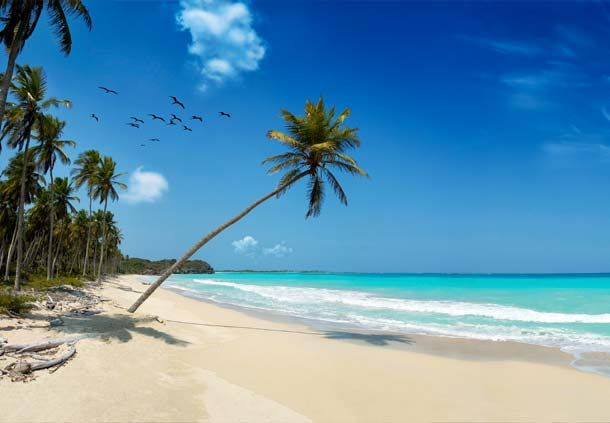 and is Kenya's most popular beach resort with many excellent hotels, restaurants and marine sports centres. The beach itself is a long stretch of white sand fringed by palms and other indigenous bush.