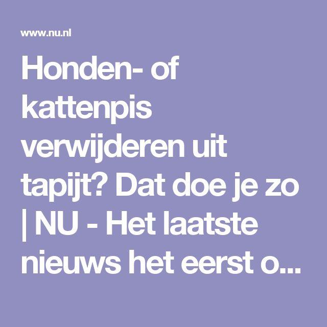 Honden- of kattenpis verwijderen uit tapijt? Dat doe je zo | NU - Het laatste nieuws het eerst op NU.nl