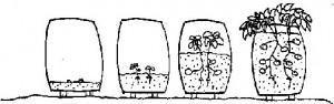 Cómo cultivar patatas en casa con sacos | Cuidar de tus plantas es facilisimo.com