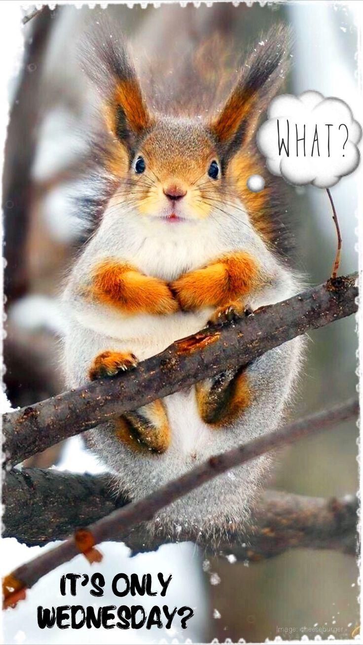 25+ best ideas about Wednesday hump day on Pinterest ...  25+ best ideas ...