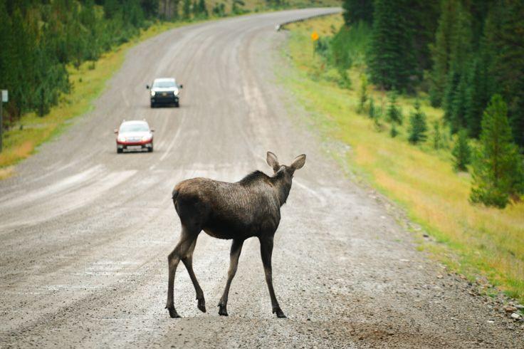 Canada: la terra dove la natura regna sovrana!