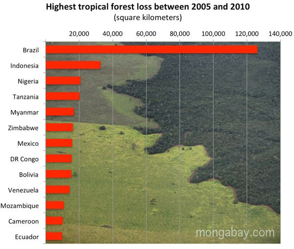 issue of devastation of the rainforest The devastation of deforestation essay sample according to national geographic, forests cover about thirty percent of the earth's land area this percentage is falling drastically.