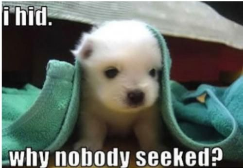 Cute Animal, Animal Baby, Little Puppies, Pets, Baby Animal, Baby Dogs, Funny Animal, Baby Puppies, Bath Time