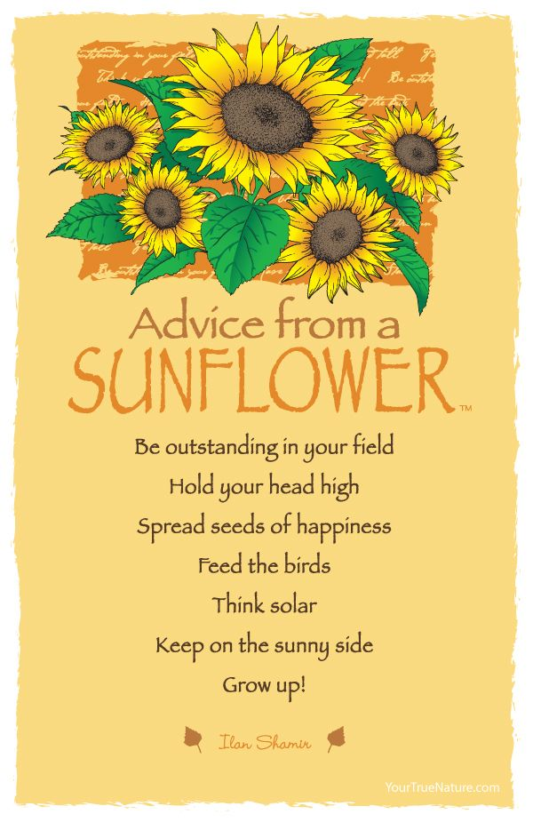 Advice from a Sunflower - Postcard - Your True Nature
