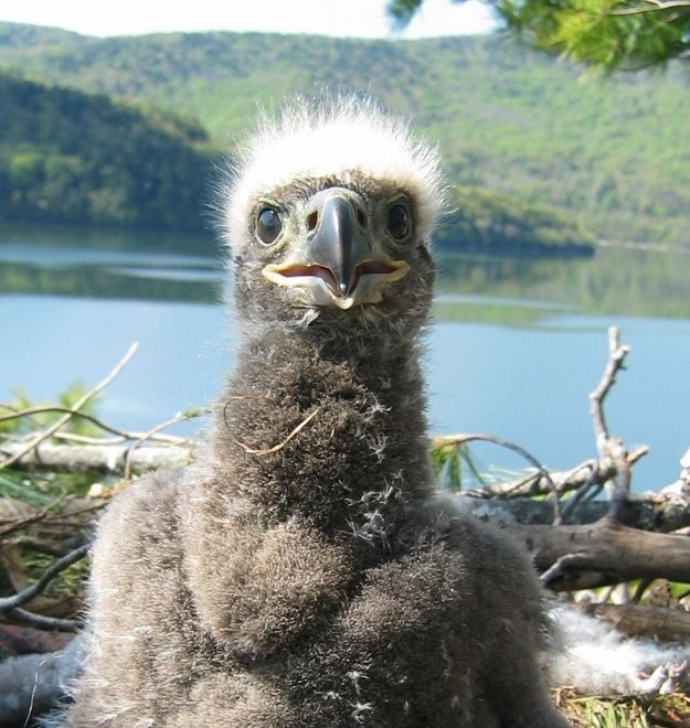 Eaglet | Community Post: The Definitive Ranking Of Baby Animal Names, By Cuteness