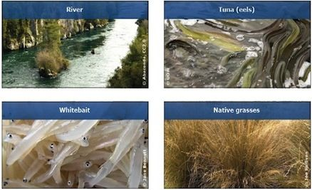 STUDENT ACTIVITY - River connections - In this activity, students make connections between the river environment and the species in and around it, learning about their relationships. The activity helps them visualise the interdependence within the river environment.