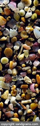 (MAUI SAND GRAINS PANORAMA) A panorama of selected sand grains arranged on a glass slide using acupuncture needles to herd the grains into place. The image is pieced together from half a dozen images taken side by side, and then stitched together into one panoramic image.