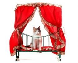 The Cat Bed: 1 Solution To 3 ProblemsCat Beds, Weird Excuses, Shelters Workers, Animal Shelters, Workers Spreads, Owners Surrender, Owners Leaves, Cat Owners, Cat Drop