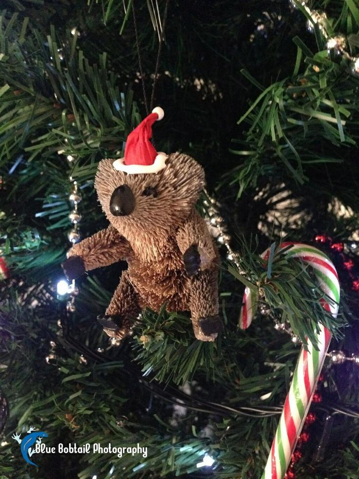 Merry Christmas, love Blue Bobtail XX #AUSTRALIA #Christmas #MerryChristmas #XmasInParadise