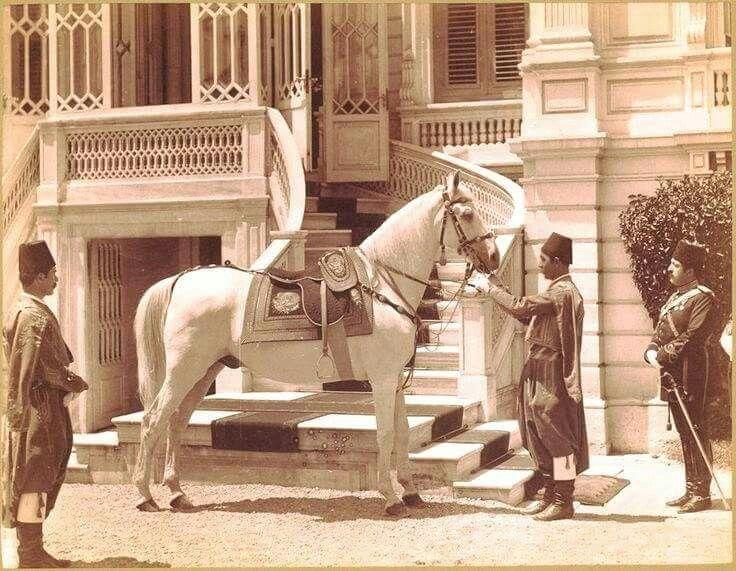 Atam Abdulhamid Hanın çok sevdiği atı FERHAN. Bir arap aşireti tarafından Sultan Abdülhamid Han'a hediye edilen Ferhan, sultanımız üstüne binecekken hafifçe eğilmesiyle bilinir.