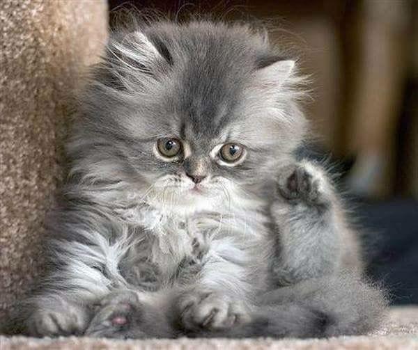 Bébé chaton