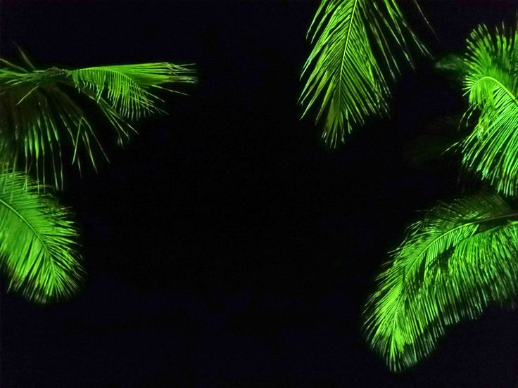 palm trees at night by Mel Graham on 500px