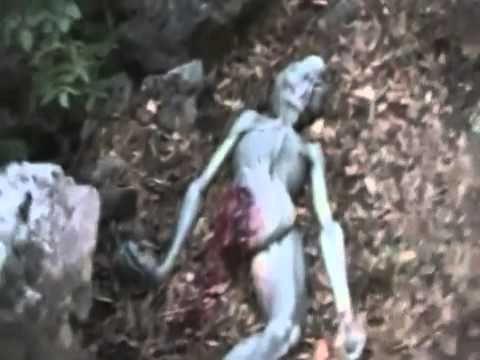 Ufo Evidence: Grey encontrado morto em montanha na Itália