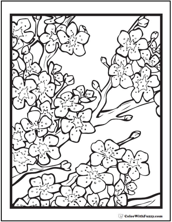 What a beautiful cherry blossom coloring page for adults!