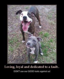Loving, loyal...