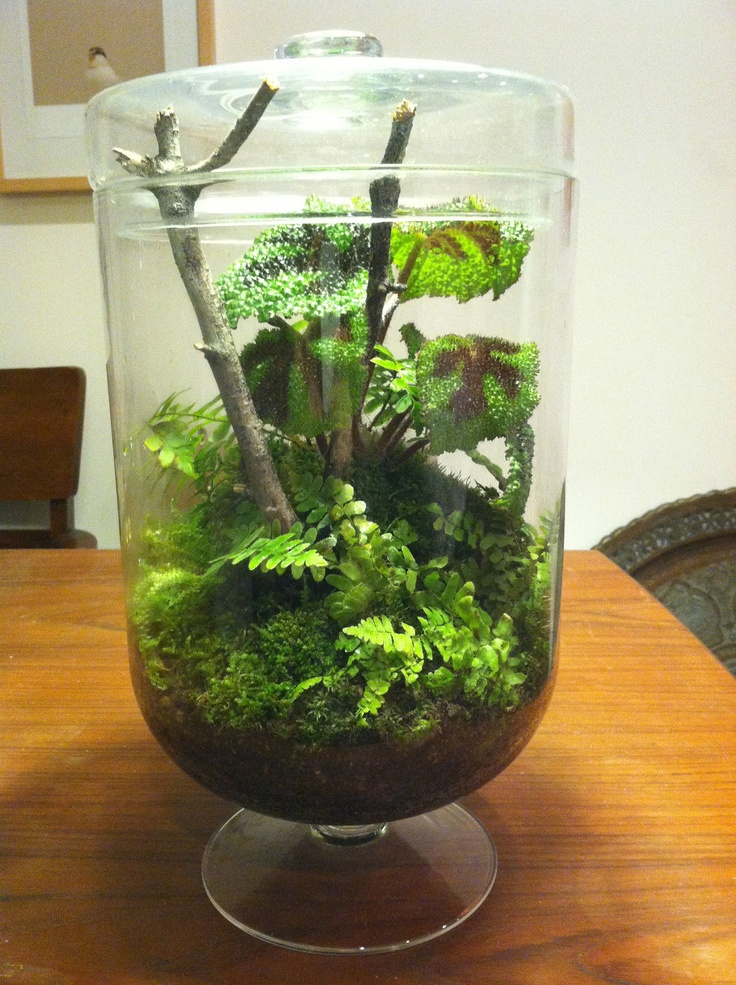 unique woodland themed terrarium in a huge footed by sweetdarias terrariums pinterest. Black Bedroom Furniture Sets. Home Design Ideas