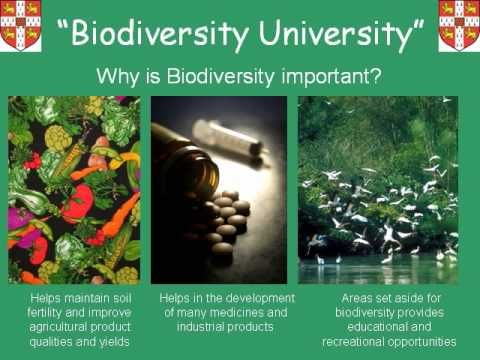 Teacher's Guide to: Biodiversity - YouTube