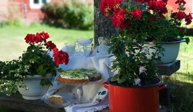 Taikinasta voi leipoa kesäkurpitsatortun tai kuppikakkuja #maajakotitalousnaiset #kesäkurpitsa #kakku #torttu