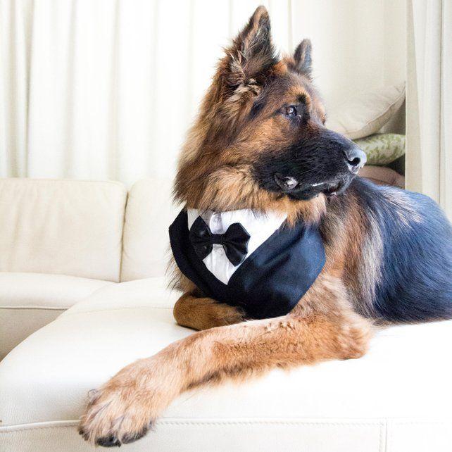 The Best Dog Wedding Attire And Accessories On Etsy Dog Wedding