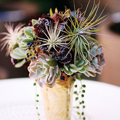 For a striking display, arrange echeveria rosettes in vases with other eye-catchers, such as the burgundy-flowered scabiosa, blue viburnum berries, spidery tillandsias, and trailing string of pearls stems pictured here. Afterward, set the rosettes into containers filled with succulent mix to start new plants