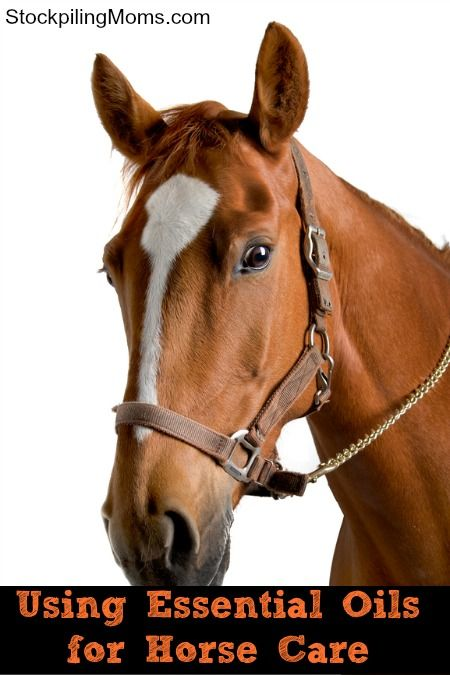 Can you use Essential Oils for Horse Care? Yes, you can! Read this for more info!
