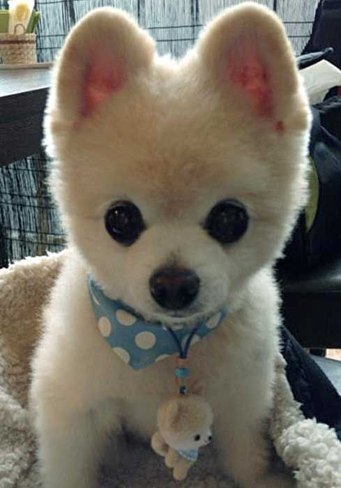 17 Best images about Cute Animals!! on Pinterest | The bug ...