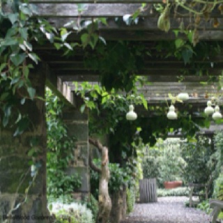 Gourds hanging on a trellisGardens Ideas, Secret Gardens, Gardens Walkways, Vertical Gardens, Vegetables Gardens, Gardens Spaces, Beautiful Gardens, Emily Gardens, Gourds Hanging