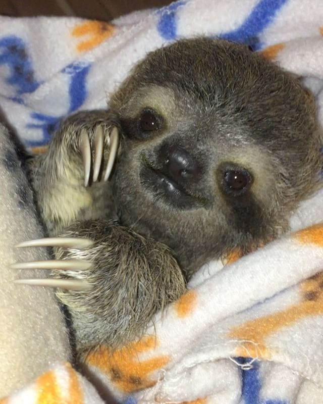25+ best ideas about The Sloth on Pinterest | Sloth animal ...