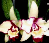 Kasem Boonchoo Orchid Nursery, Thailand - Orchids (Dendrobium, Cattleya, Oncidium, Ascocenda, Vanda, Aranda, Mokara,Thai species) nursery and tropical flowers and plants grower and exporter