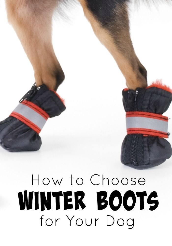 Keep your dog's paws protected this winter and check out our tips on how to choose winter boots for your dog.