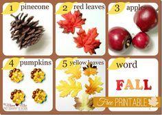 Seek-n-Find Fall Sensory Bin w/free printable {mama♥miss} ©2012