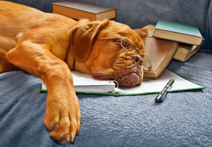 OU… O que podemos aprender com os cães Olá pessoal, tudo bem? Hoje decidi escrever sobre um tema que envolve cães e seres humanos. Esse canal trata não apenas de cachorros, mas fundamentalmen…
