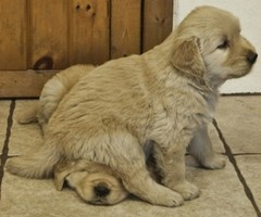 """""""Um, excuse me.  But, you're sitting on my head."""""""