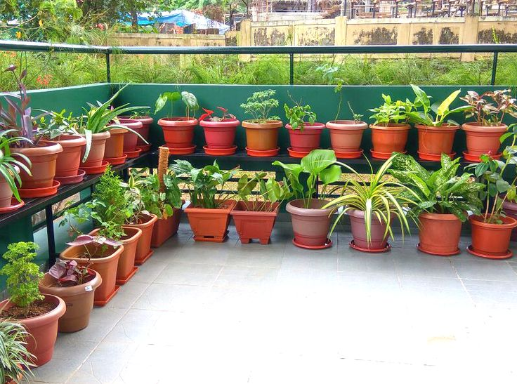 enjoy the every day of life by making a beautiful green and cozy balcony and interiors - Garden Design Kerala