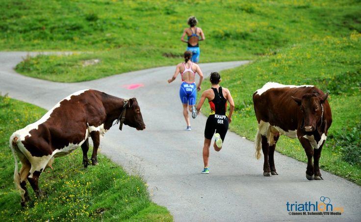 Gallery: ITU World Triathlon Kitzbuehel
