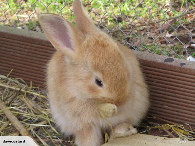 F Giant Rabbit 49 best images about F...