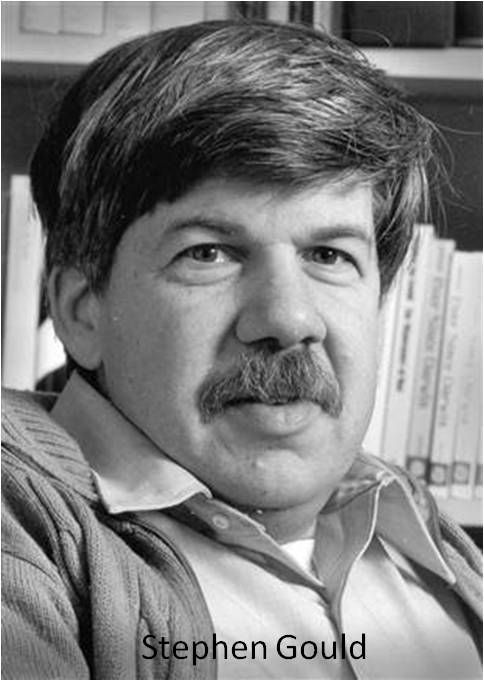 "essays by stephen j gould Stephen jay gould's 1980 essay ""women's brains"" reflects upon the ""scientific"" determination of the inferiority of women, questioning the science behind studies that concluded women to be inferior to men because of their lesser brain size gould asserts the absurdity of scientific."