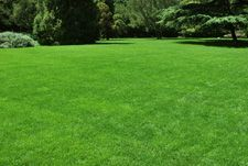 adding 2 tblspns of epsom salt to 1 gallon of water..spreading across your lawn, then water with sprinkler..helps grass become greener.