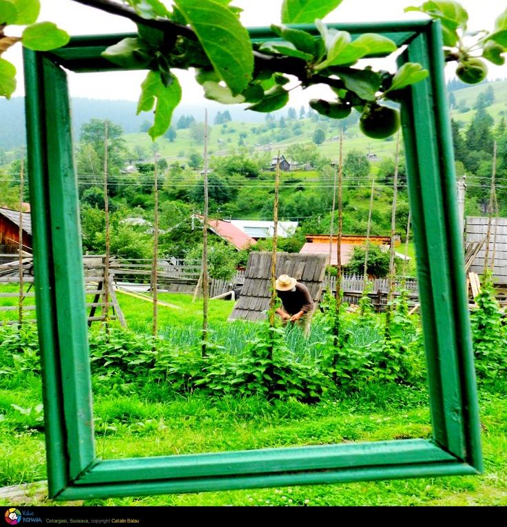 O zi obisnuita in Bucovina
