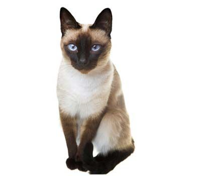 This cat looks just like my Pretty Boy Floyd except Floyd has a hair that is a bit fuzzier.