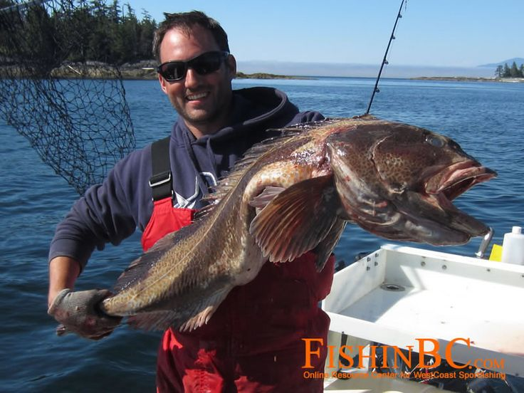 Lingcod fishing tips img 1851 saltwater fishing for Saltwater fishing tips