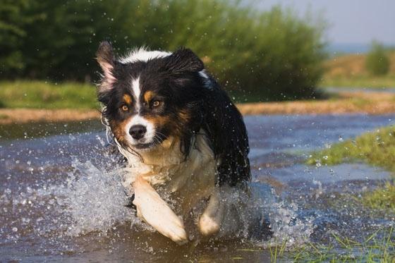 Żywienie psa bardzo aktywnego:  http://www.kakadu.pl/Zdrowie-psow/ywienie-psa-bardzo-aktywnego.html