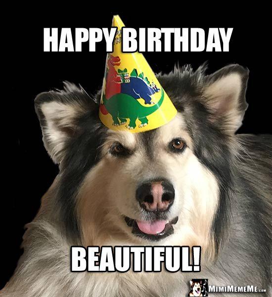 2a8143d5519cb9c77cb473d1f0f85690 animal birthday dog birthday the 25 best birthday meme dog ideas on pinterest happy birthday,Birthday Meme Animal
